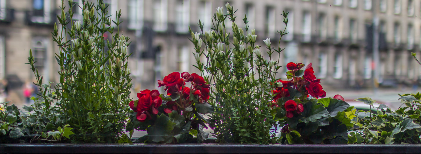 A window box with flowers at Haymarket Apartments